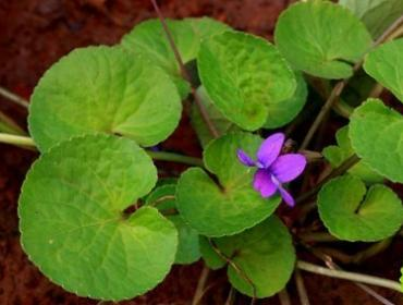 9 Must Know Facts About Brahmi (Bacopa monnier